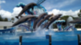 sea world.jpg