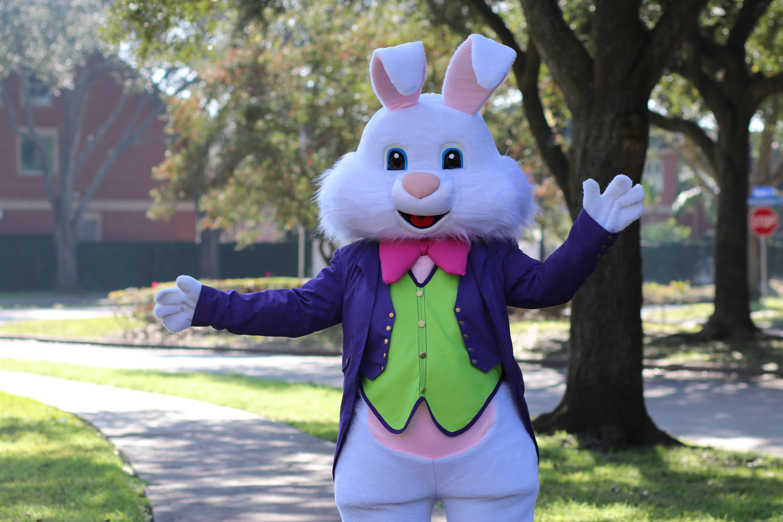 Purple Bunny3