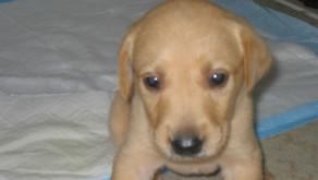 Help me potty train my dog!!!