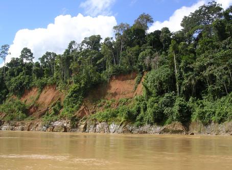 Pérou : l'armée pour sauver la forêt ?