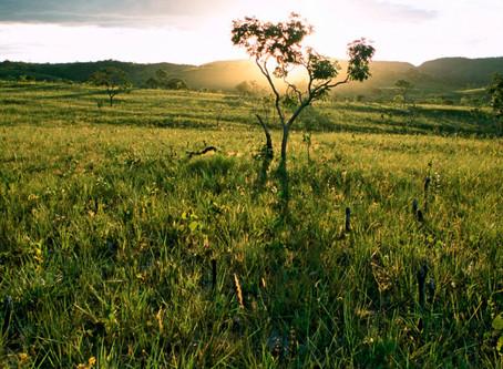 La savane du Cerrado : un patrimoine en péril