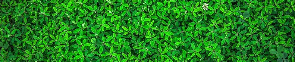 leaf-1498985_1920.jpg