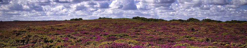 landscape-4418094_1920.jpg