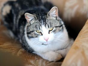 Katzen-Klischees: Was ist wahr?