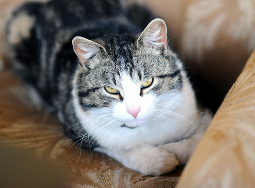 Example: Tips on adopting a cat