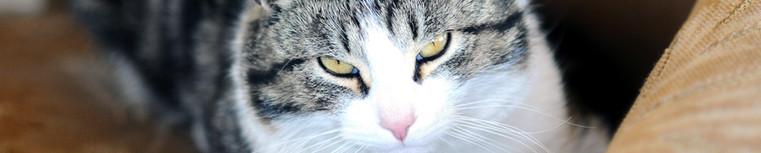 Cat pet sitter