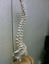 腰痛、戸塚区、整体