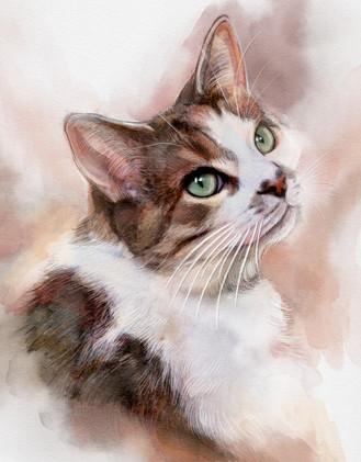 LEMON THE CAT