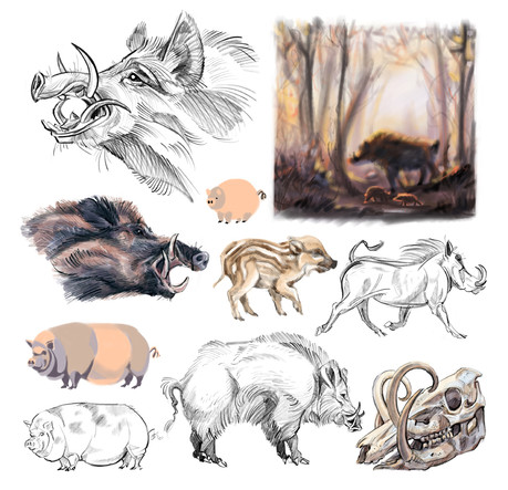 PIG STUDIES