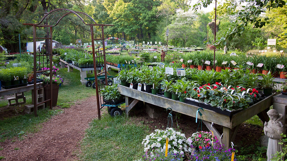 View of our garden center flowers, vegetables, herbs and plants for sale in Framingham MA