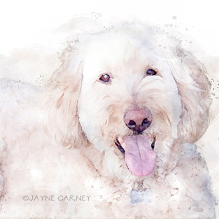 Cully Watercolor