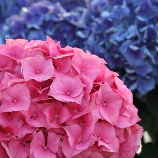Flower & Garden Photography