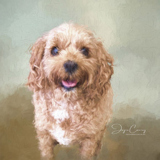 Molly Painting