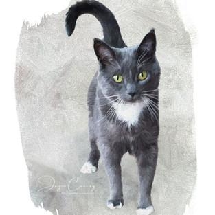 Gidget Portrait