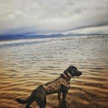 Max Dog Photo.jpg