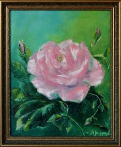 Розовый цвет  50х40 х.м. 2018