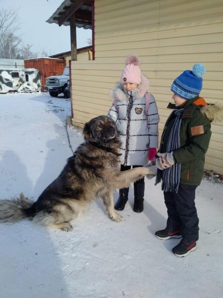 Замёрзший охранник зоосада