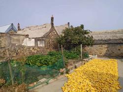 Пленэр в деревне