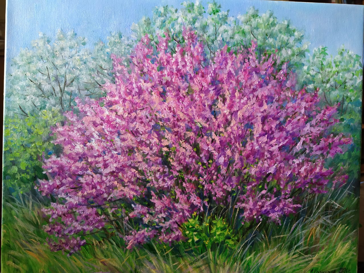Сакура цветёт 40х50 х.,м.
