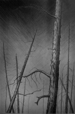 Мертвый лес б., кар.