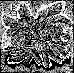 Шишки. Серия Дары ДВ природы