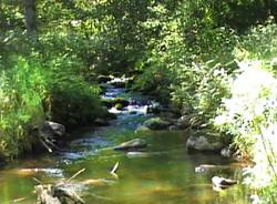 Красивый ручей