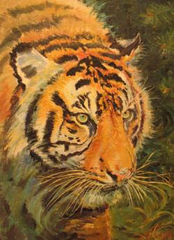 Тигр 40х30 х