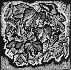 Виноград дикий. Серия Дары ДВ природы