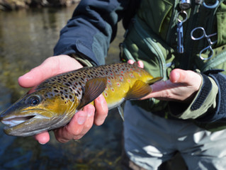 Fly Fishing Allergies
