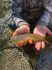 Elusive Fall Brown Trout