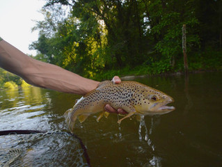 Tips for Becoming a More Conscious Angler