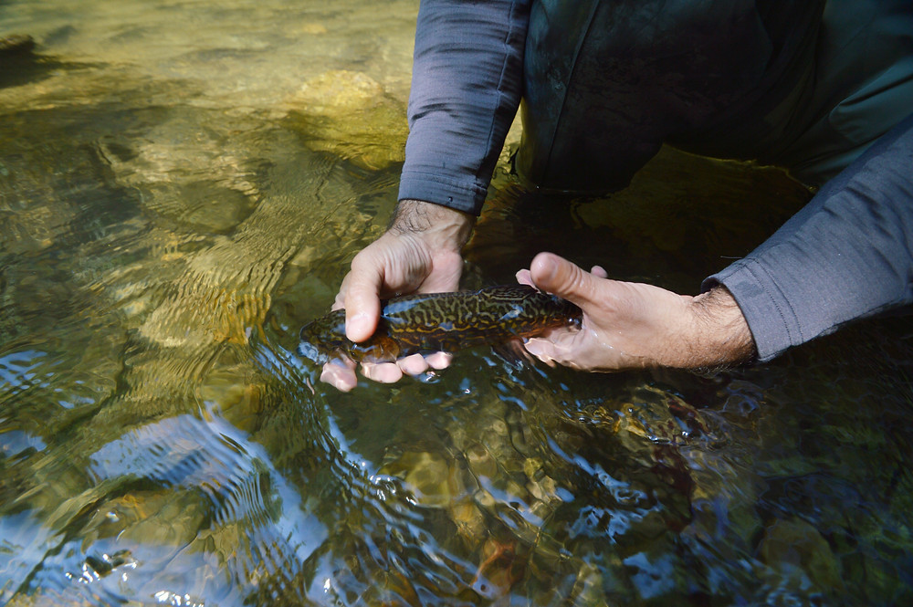How to safely release a fish