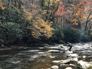 Fly Fishing Western North Carolina in the Fall