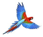 perroquet@2x-1.png