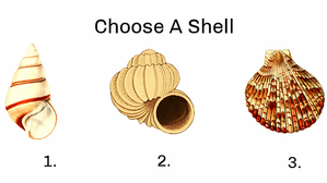 Each Shell Represents A Hidden Aspect Of Your Personality!