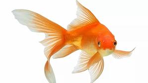 8 Feng Shui Tips That Bring In Abundance