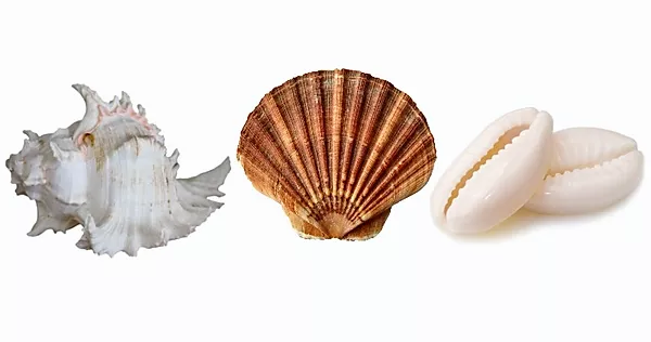 Pick A Shell And Find Out What It Reveals About You
