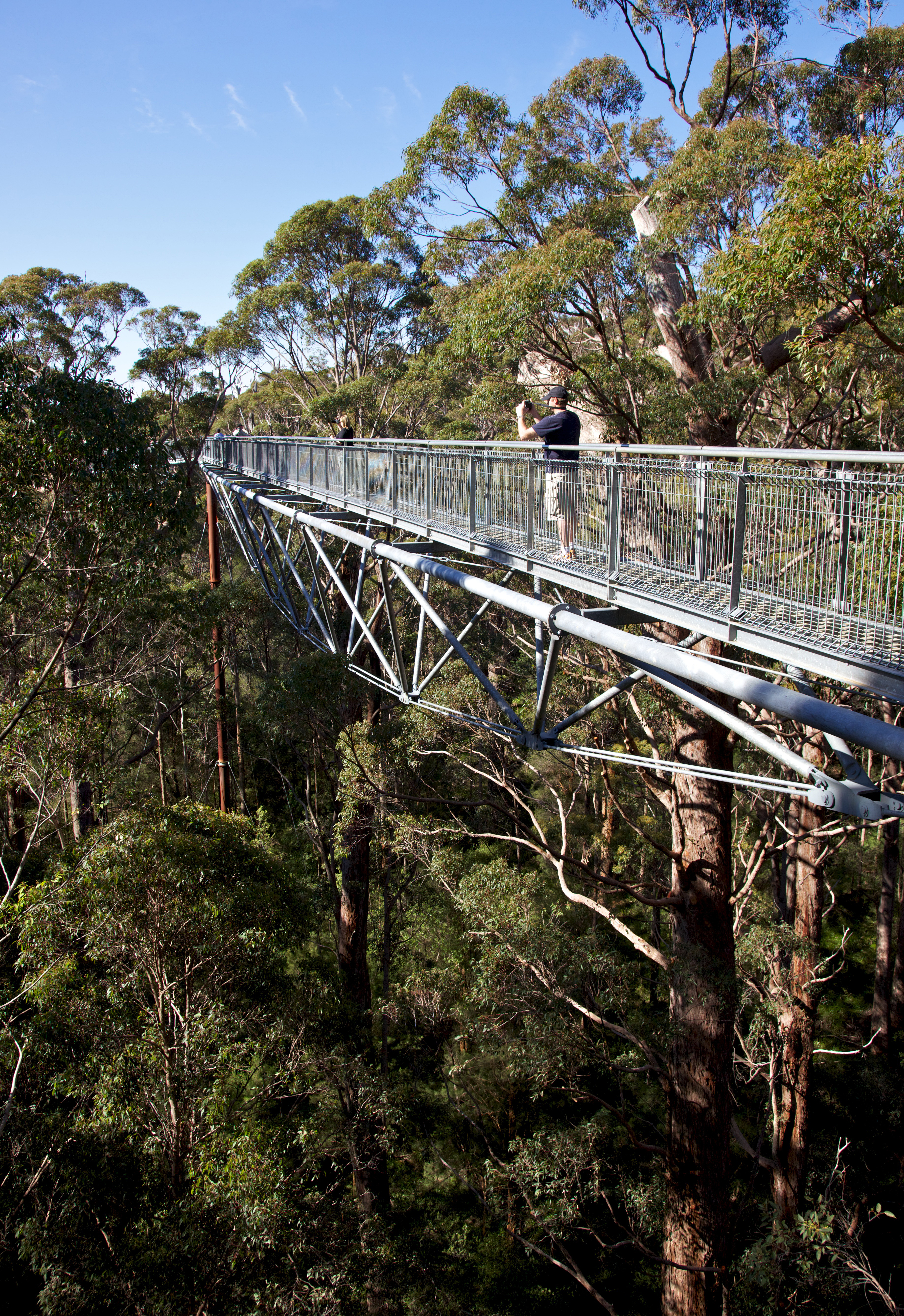 Tree Top Walk in the Valley of the Giant