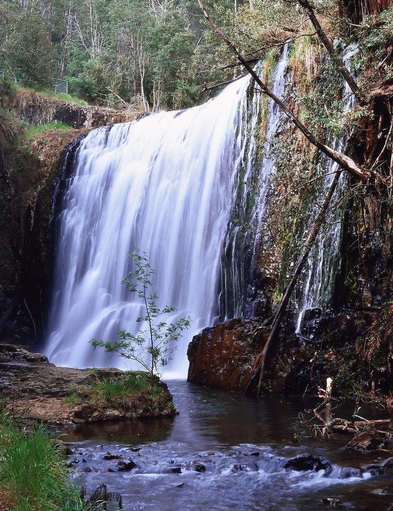 Guide Falls Alpaca Park.