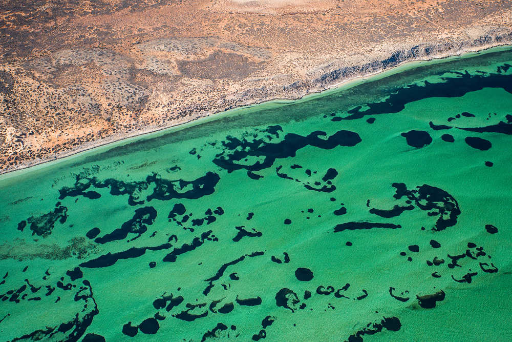 Shark Bay, Zuytdorp cliffs, Denham, West
