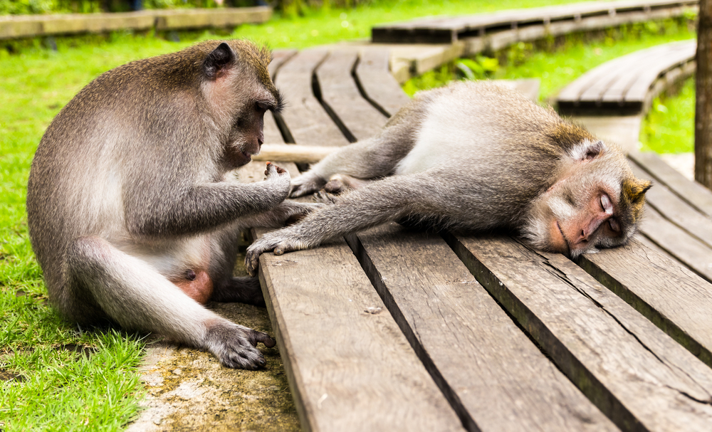 Monkey forest of Ubud, Bali Island, Indo