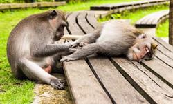 Monkey forest of Ubud, Bali Island, Indo