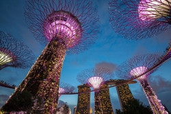 Garden by The Bay, Singapore.