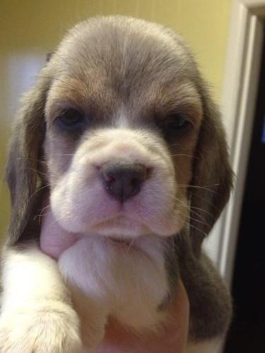 at 6 weeks