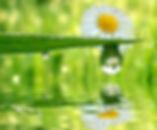 Marguerite.jpg