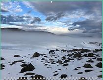 Screen Shot 2020-11-19 at 2.46.46 PM.png