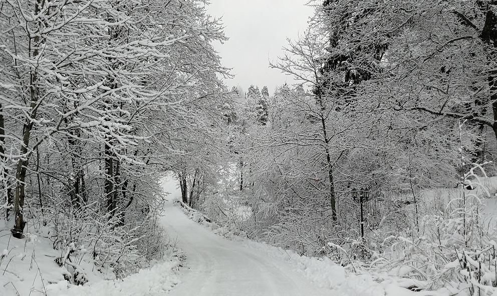 Talvinen_mökkitie.jpg