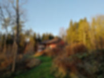 Simpukka_20181118.jpg