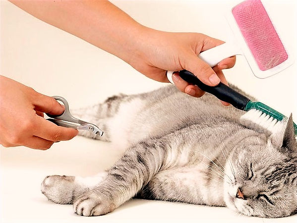 cat grooming picture_edited.jpg