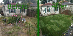 sod before and after (Large)